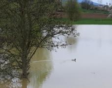 Impression Hochwasser 6